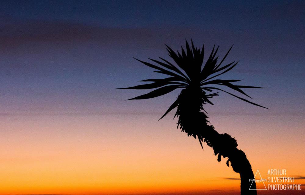 italie trieste palmier ciel colore